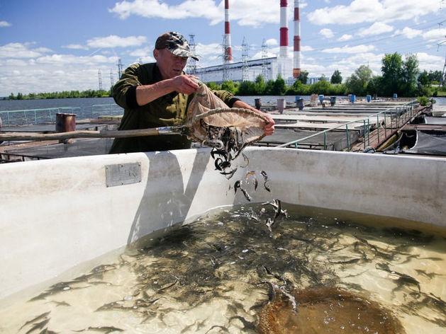 В Татарстане имущество обанкротившегося рыбхоза пустят с молотка за 36 млн