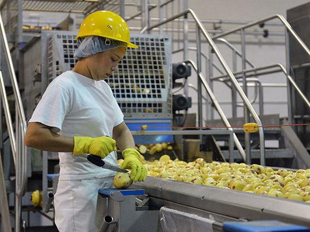 В Татарстане построят завод по производству картошки фри
