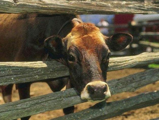 Счетная палата РТ заявила о низких результатах получивших гранты фермеров